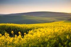 Campos amarillos de la primavera Fotografía de archivo