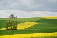 Campos amarillos de la rabina Imagen de archivo libre de regalías