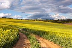 Campos amarillos del canola y camino de tierra que pasan por alto un valle, rural Imágenes de archivo libres de regalías