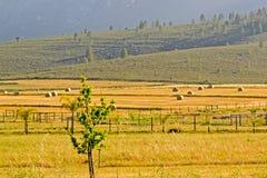 Campos amarillos del heno Imagen de archivo