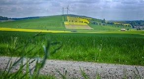 Campos amarillos en Baja Sajonia Imagen de archivo libre de regalías