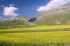 Campos amarillos en Castelluccio Fotografía de archivo