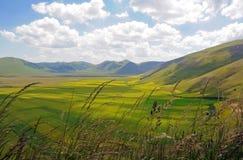 Campos amarillos en Castelluccio Foto de archivo libre de regalías