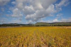 Campos amarillos para nunca Fotos de archivo libres de regalías