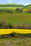 Campos amarillos verdes Fotografía de archivo libre de regalías