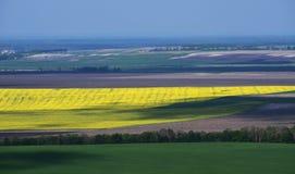 Campos amarillos, verdes y grises ilimitados separados por los ?rboles fotografía de archivo