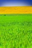 Campos amarillos y verdes Fotografía de archivo libre de regalías