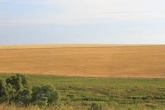 Campos amarillos y verdes con el horizonte Imagen de archivo libre de regalías