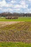 Campos após a colheita Fotos de Stock