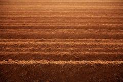 Campos arados de la agricultura del suelo de arcilla roja Fotografía de archivo