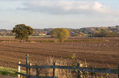 Campos arados en el campo de Essex en otoño Fotografía de archivo
