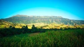 Campos arroz y Mountain View Fotos de archivo libres de regalías