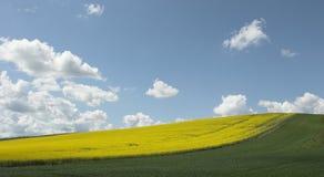 Campos bajo el cielo azul Fotos de archivo libres de regalías