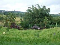Campos bonitos do arroz de Jatiluwih Imagens de Stock Royalty Free