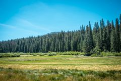 Campos, bosques y prados del valle de Yosemite California, Estados Unidos Foto de archivo