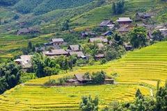 Campos colgantes del arroz Fotos de archivo