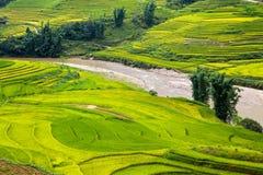Campos colgantes del arroz Imágenes de archivo libres de regalías