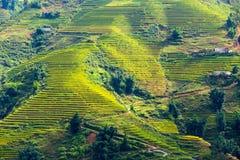 Campos colgantes del arroz Fotos de archivo libres de regalías