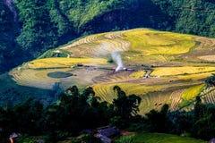 Campos colgantes del arroz de oro en el tiempo de cosecha Fotografía de archivo libre de regalías