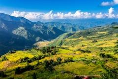 Campos colgantes del arroz de oro en el tiempo de cosecha Imagen de archivo libre de regalías