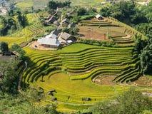 Campos colgantes del arroz en colinas Imagenes de archivo