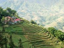 Campos colgantes del arroz en colinas Imagen de archivo libre de regalías