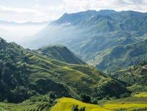 Campos colgantes del arroz en colinas Fotografía de archivo libre de regalías