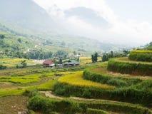 Campos colgantes del arroz en colinas Imágenes de archivo libres de regalías