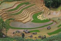 Campos colgantes en el PA del Sa - Lao Cai - Vietnam del norte imagen de archivo libre de regalías