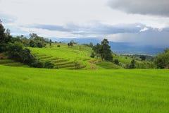 Campos colgantes y cielo del arroz verde después de la lluvia Imagen de archivo libre de regalías