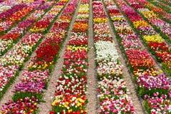 Campos coloreados Imagenes de archivo