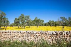 Campos coloreados de Mallorca Fotos de archivo