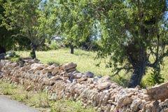 Campos coloreados de Mallorca Fotografía de archivo