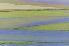 Campos coloreados en el piano grande, Monti Sibillini NP, Umbría, Ital Imagen de archivo