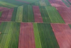 Campos coloridos da alfazema vistos do avião Imagens de Stock