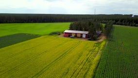 Campos coloridos de uma exploração agrícola vermelha pequena, onde as batatas e os cereais são crescidos video estoque