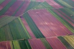 Campos coloridos do lavander vistos do avião Imagem de Stock Royalty Free