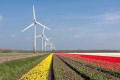 Campos coloridos holandeses del tulipán con windturbines Foto de archivo libre de regalías