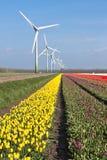 Campos coloridos holandeses del tulipán con windturbines Fotografía de archivo