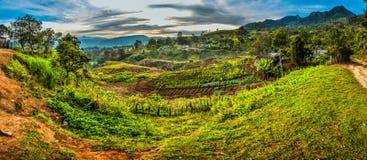 Campos com colheita fotografia de stock
