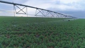 Campos com a colza irrigada com sistemas de extinção de incêndios, cultivo industrial da grande escala vídeos de arquivo