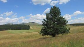 Campos con el árbol de la hierba y de pino Fotografía de archivo
