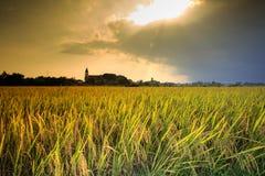 Campos cozinhados do arroz Foto de Stock