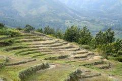 Campos cultivadores secos del cambio de clima en Kanthallur Fotos de archivo libres de regalías