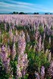 Campos cultivados Fotos de archivo