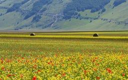 Campos cultivados e floridos de Castelluccio di Norcia imagem de stock royalty free