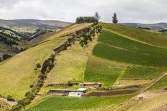 Campos cultivados em inclinações imagens de stock royalty free