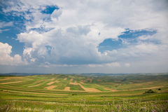 Campos cultivados en Rumania Imagen de archivo libre de regalías