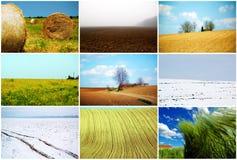 Campos da agricultura Imagem de Stock