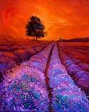 Campos da alfazema Fotos de Stock